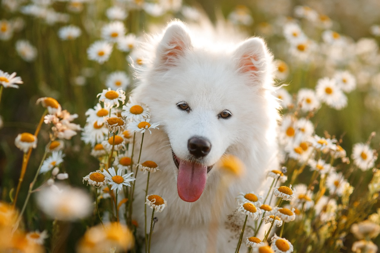 Perros felices - Pronutrition Flatazor